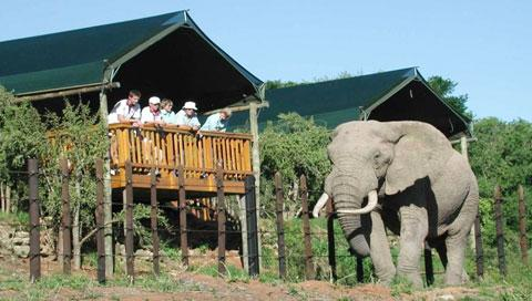Addo Elephant National Park Afrique du Sud