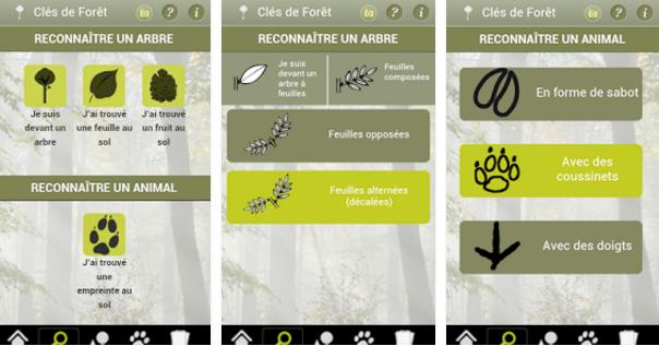 Capture clés de la Forêt