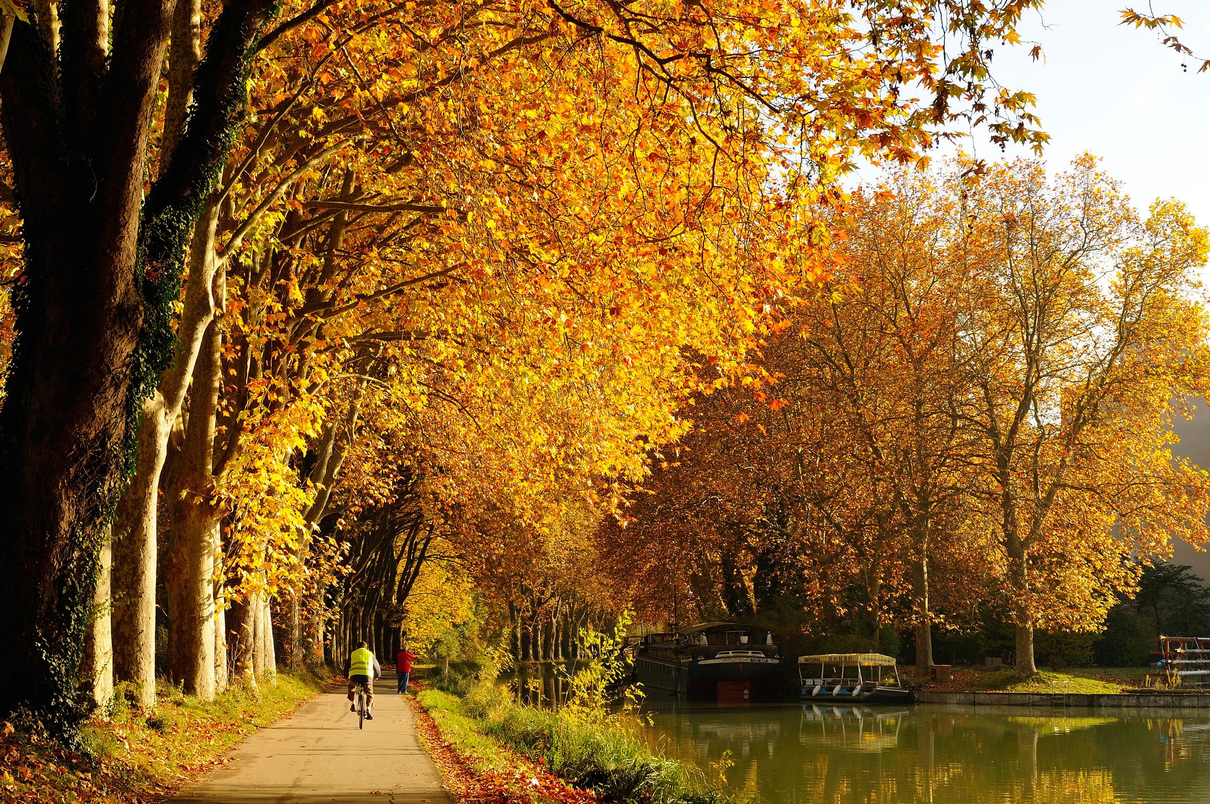Cycliste sur le canal du Midi