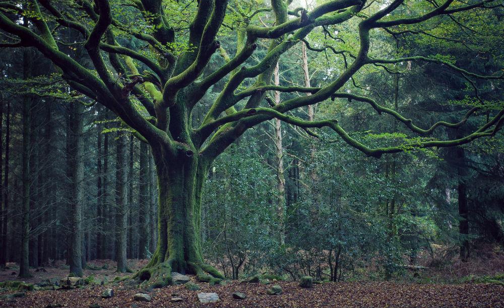 Forêt de Brocéliande à Paimpont