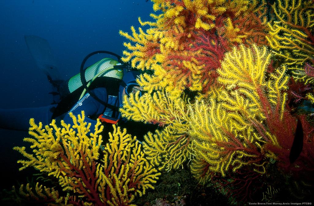 Plongée sous-marine Iles Medes