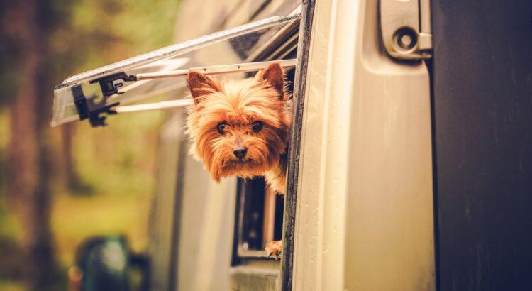 Chien dans un camping-car