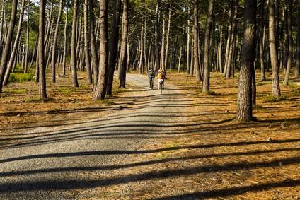 Forêt Landes
