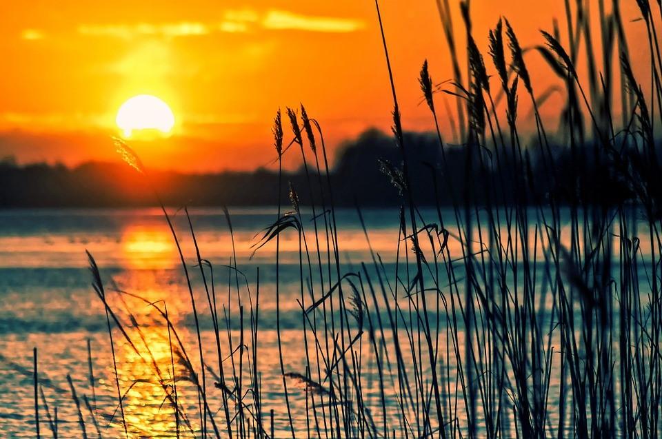 Roseau soleil couchant