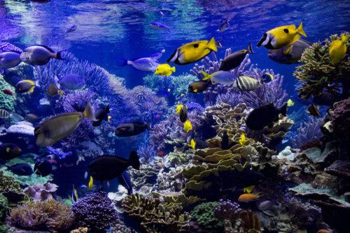 Aquarium Cap d'Agde